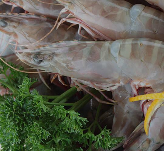 Flower Shrimp
